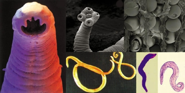parasite-collage